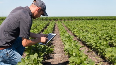 Person taking picture of plants in a field with a tablet
